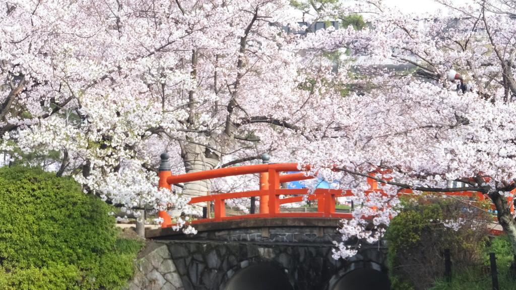 刈谷亀城公園の桜20160402