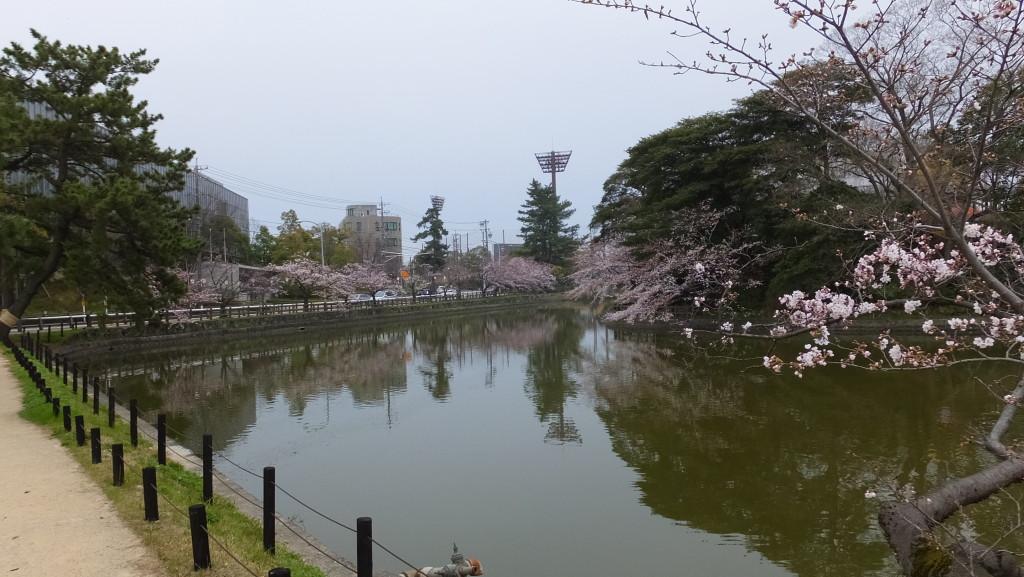 刈谷亀城公園さくら2015