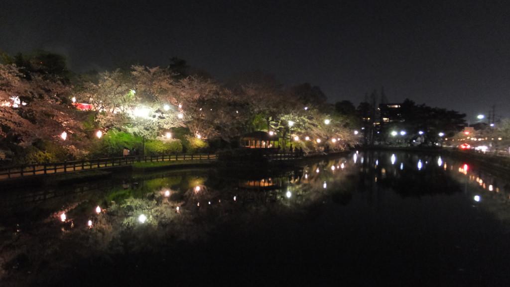 刈谷亀城公園夜桜