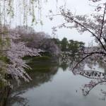 刈谷亀城公園さくら