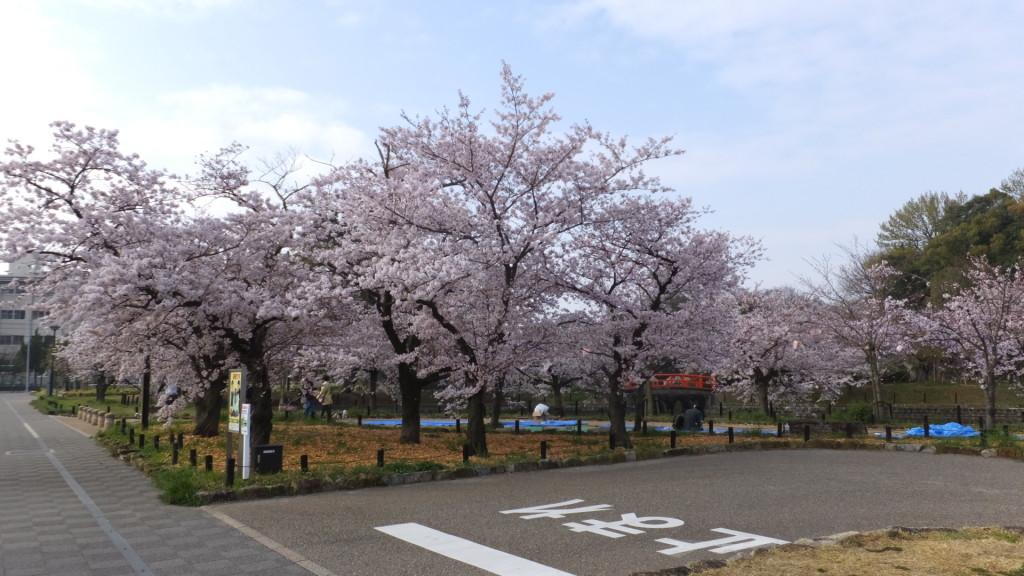 刈谷亀城公園の桜201604022