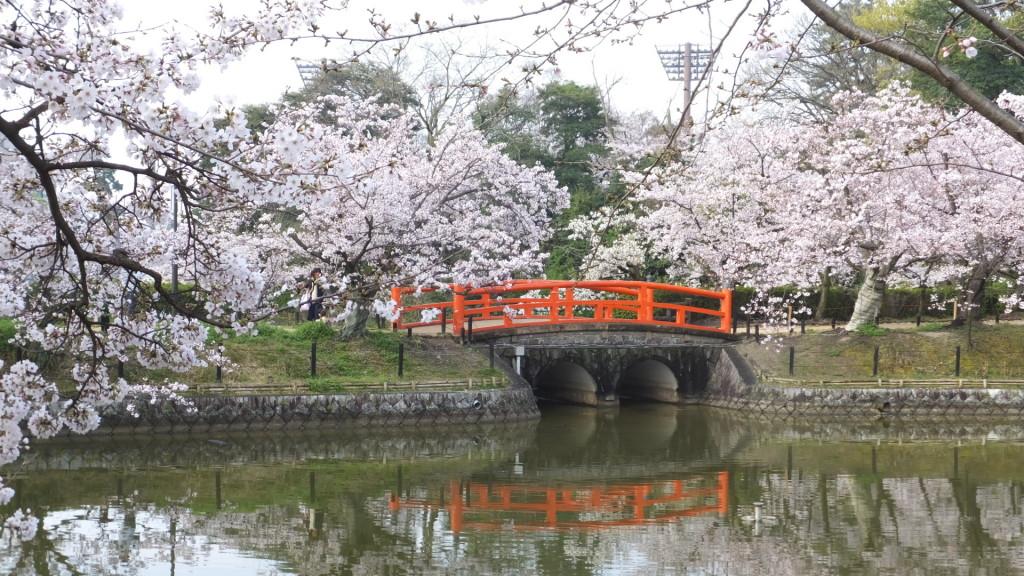 刈谷亀城公園の桜201604024