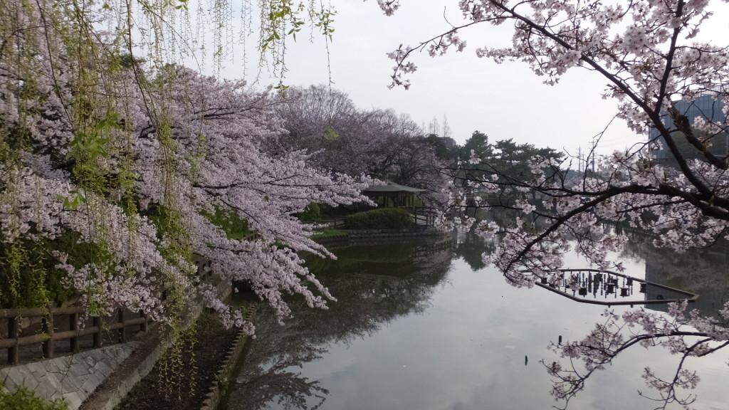 刈谷亀城公園の桜201604026