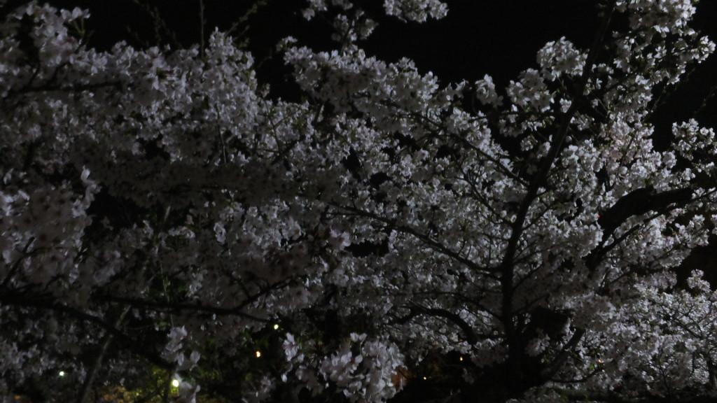 刈谷市亀城公園2016/04/04/2