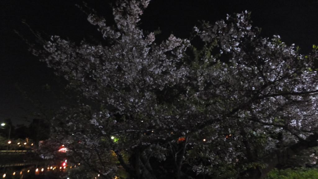 刈谷市亀城公園2016/04/08