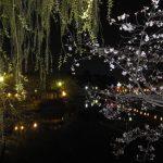 刈谷市亀城公園さくらまつり2017